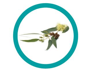 Medical Pharmaquality Octonion Syrop Σιρόπι για την Αντιμετώπιση του Βήχα & του Κρυολογήματος, για Ενήλικες, 200 ml-1